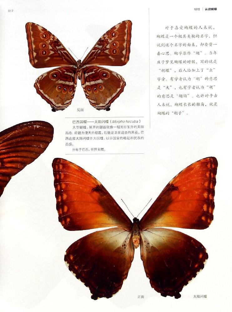 曾作为高级访问学者在美国国家自然博物馆和韩国昆虫