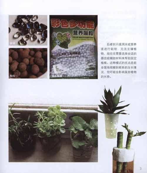 水培的基本操作步骤 实战 绿萝 吊兰 广东万年青 密叶朱蕉 合果芋 吊