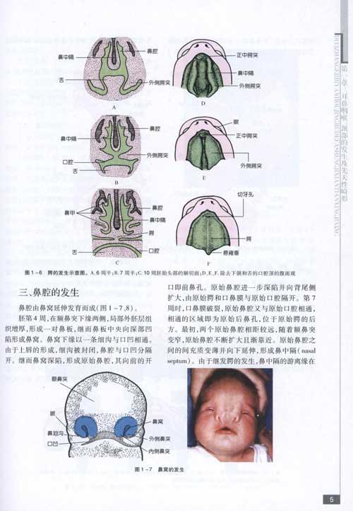 耳鼻咽喉科临床解剖学