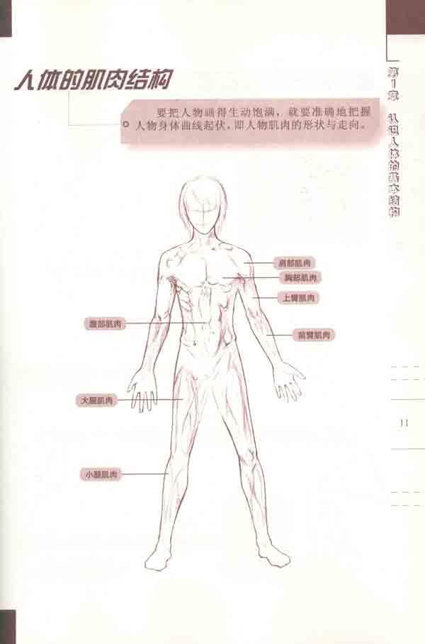 腰部的表现和动态    肩部的表现和动态    胳膊的结构和动态图片