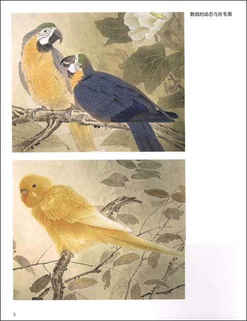 工笔鹦鹉画法-刘刚 绘-技法教程-文轩网