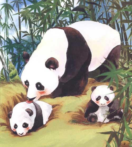 谜语认知系列 动物 焦柒月 幼儿启蒙