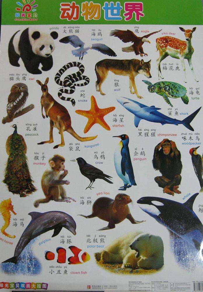 阳光宝贝双面大挂图61动物世界-童茗--文轩网