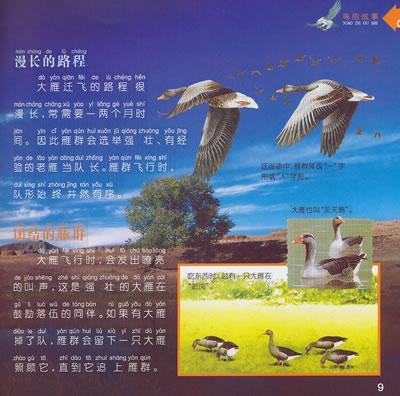 动物世界鸟的故事-龚勋-图书-文轩网