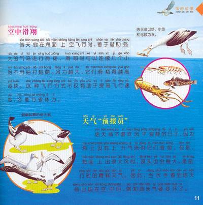 动物世界鸟的故事