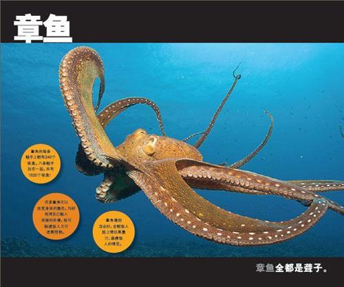 美国国家地理:海洋动物跳出来