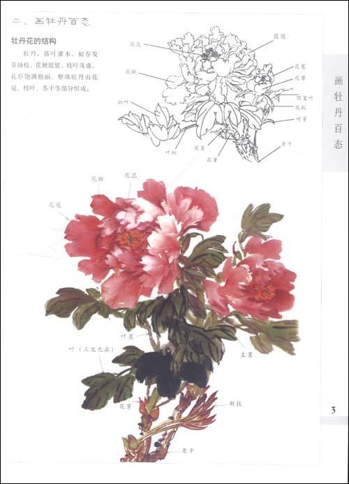 枝干的画法/4 叶子的画法/4 花蕾的画法/5 牡丹花冠画法/6 牡丹花瓣的