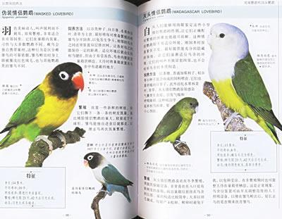 软嘴鸟 虎皮鹦鹉 鸡尾鹦鹉和长尾鹦鹉