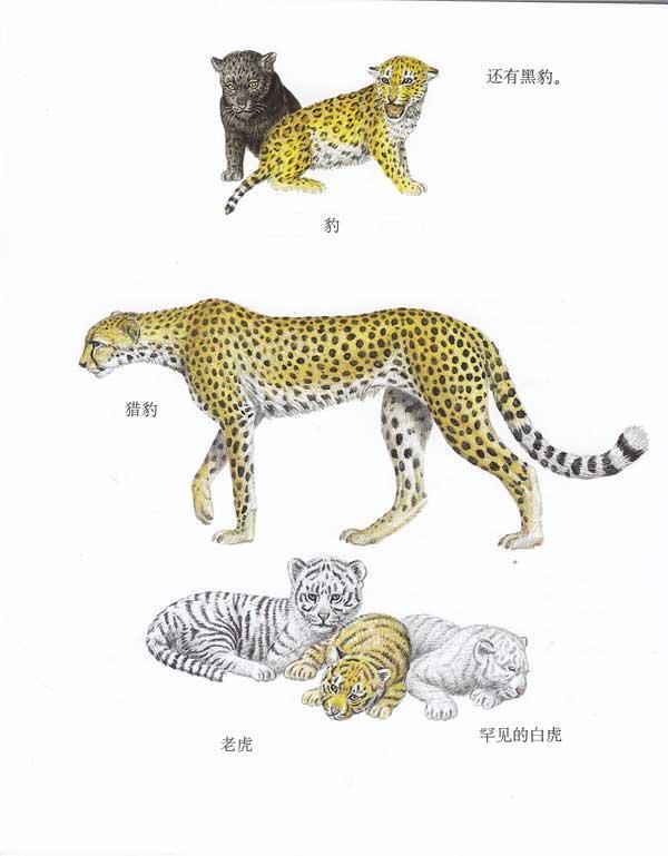 单种动物类/第一次发现丛书--科普/百科-文轩网