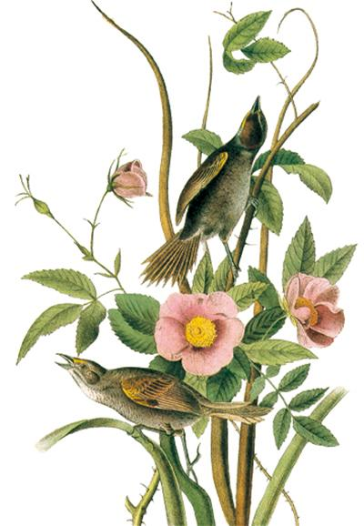 世界大师手绘经典鸟类之书